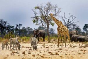 Cinq raisons d'aller au Zimbabwe